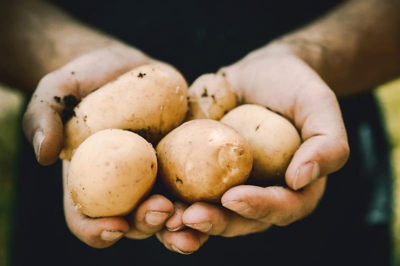 Potato Club