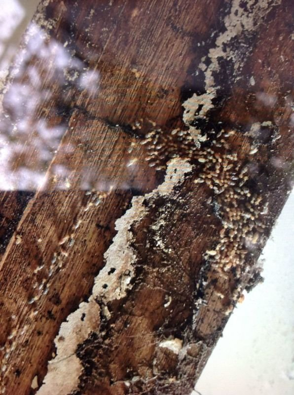 Termite Inspection, treatment and Control