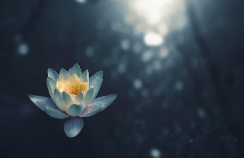 Souvenirs des différentes journées mondiales du Qigong