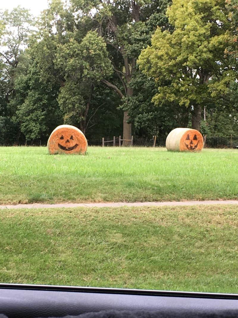 Hay Pumpkins