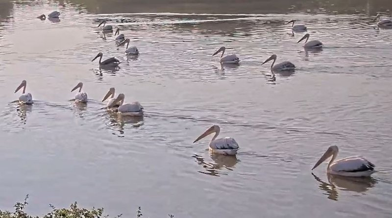 Live Hula Nature Reserve Cam|Israel Nature & Parks Authority|The Charter Group of Wildlife Ecology