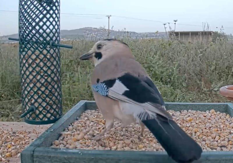 מתקני האכלה לציפורים