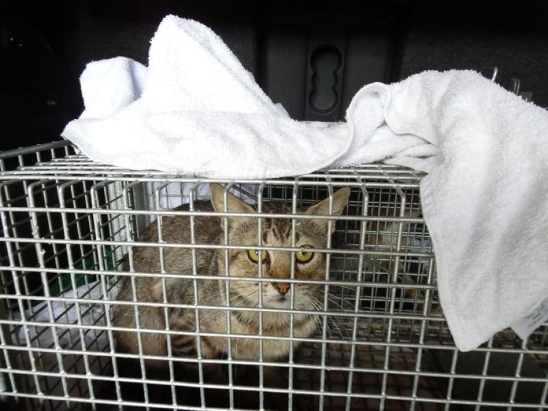 Stray Cat Rescue