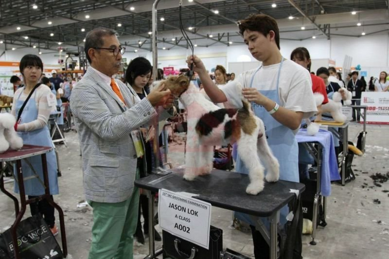 SKC GROOMING COMPETITION 2018