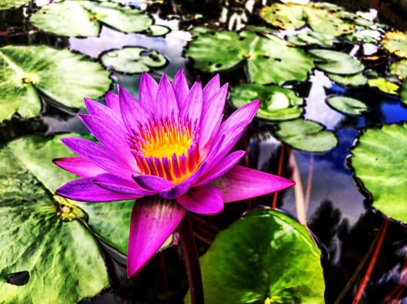 Photo of the Botanic Gardens by Jack Loomes