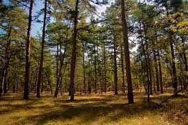Pine Barrens Edibles and Ecology - Sam Thayer