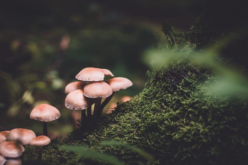 Wild Mushroom Identification Walk - Tavis Lynch