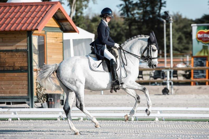 International Horse and Alpaca Transport