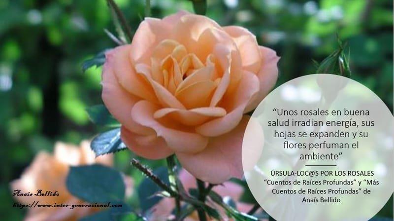 El blog de Úrsula. Loc@s por los rosales (2)