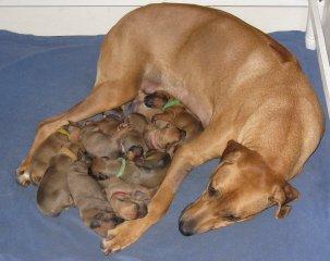 Puppies 2015