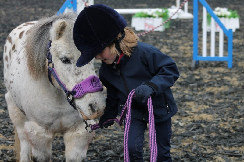 About Shetland Pony Agility