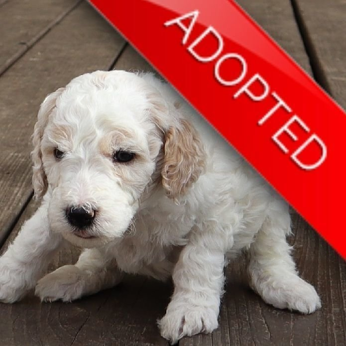 Guy (Adopted)