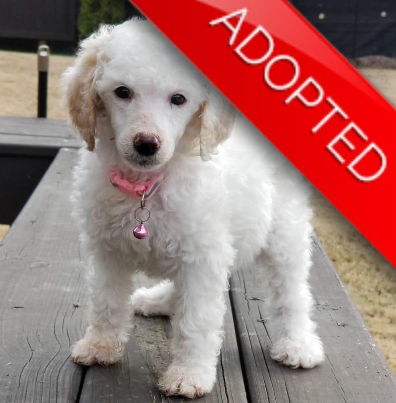 Dora (Adopted)