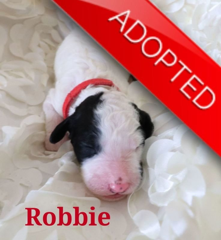 Robbie (Adopted)