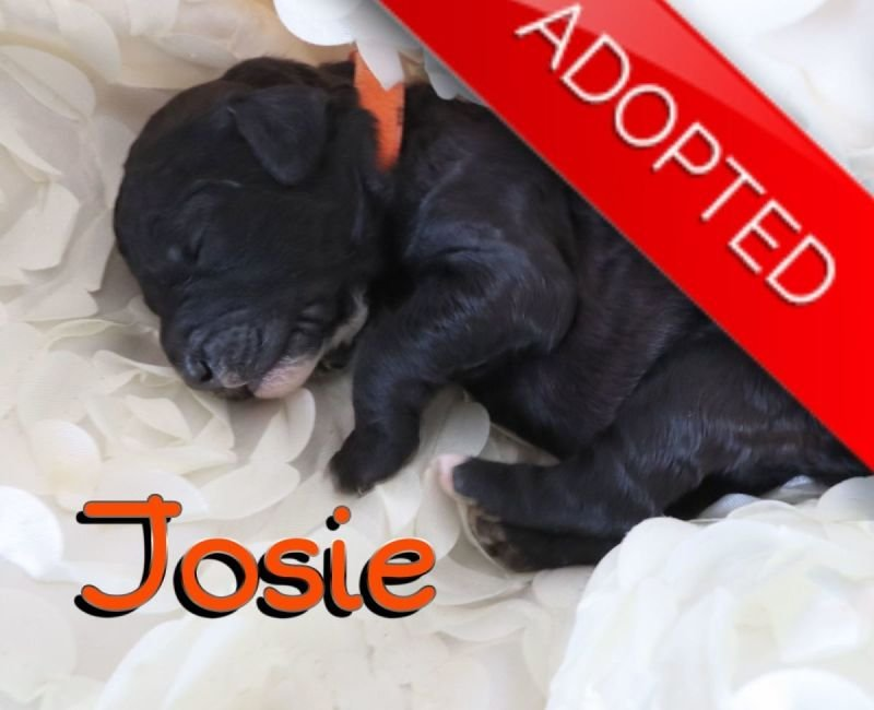Josie (Adopted)