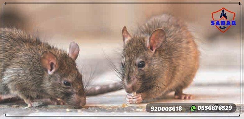 شركة مكافحة الفئران بجدة | سهر العالمية | 920003618