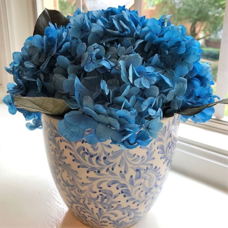 128 Blue hydrangea preserved in Blue and White vase
