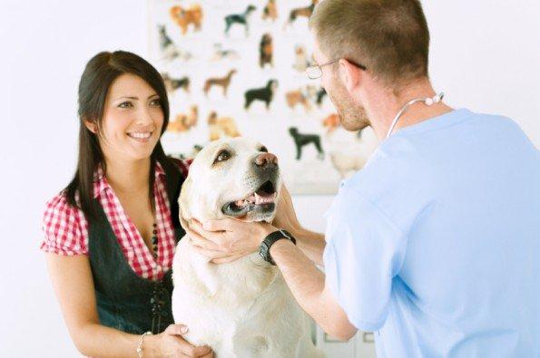Tips on Choosing an Animal Hospital