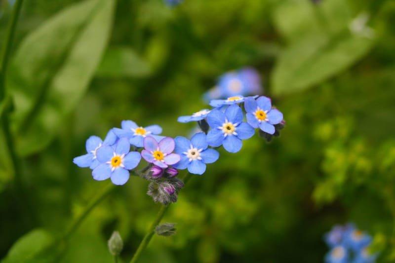 Flower Workshops Ashland