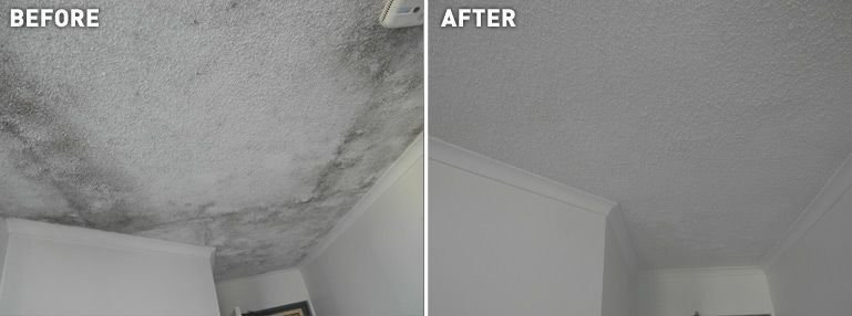Painters Dublin l Painters and Decorators Dublin offer a full mould removal service