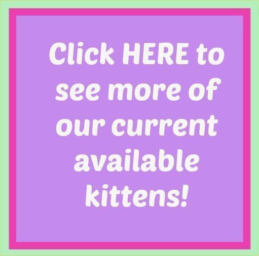 More Available Kittens