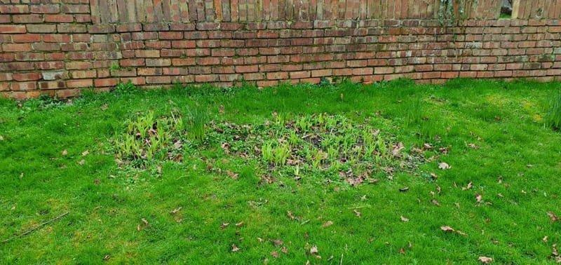 Back Garden 2 Flower bed (Before)