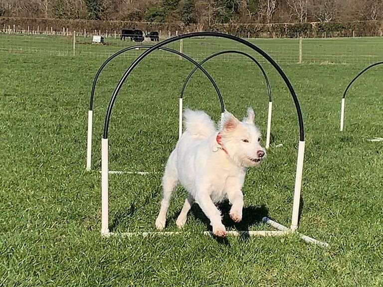 Canine Hoopers World Awards Courses