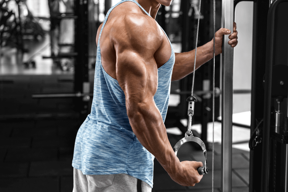 Why Train the Triceps?