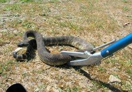 مكافحة الثعابين والعقارب