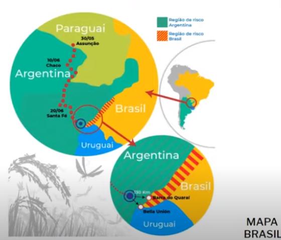 Mapa Brasil Plaga Langosta