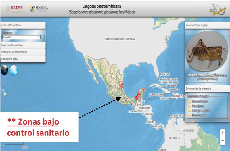 Langosta Centroamericana Senasica Mexico 2