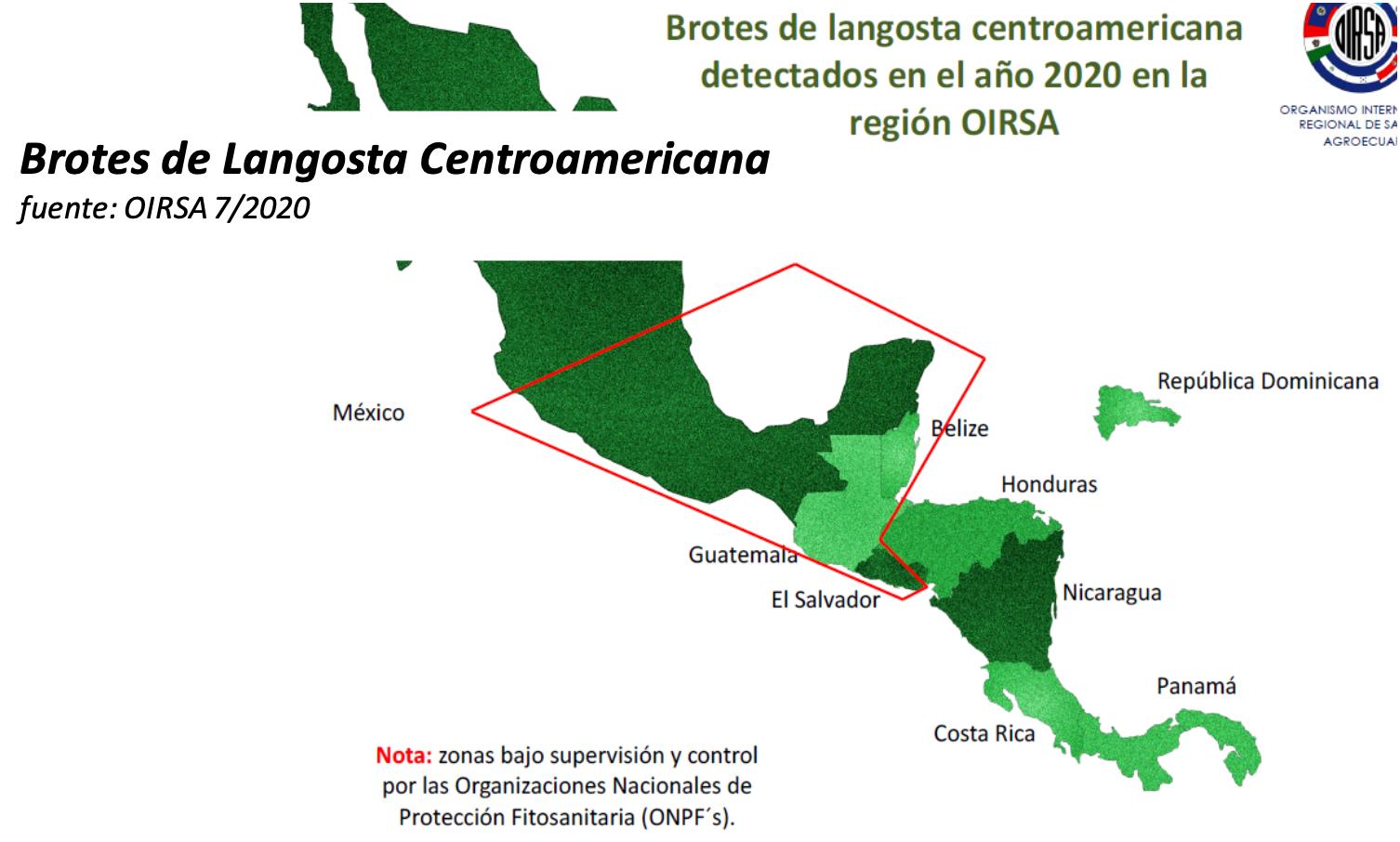 Brotes Langosta Centroamericana