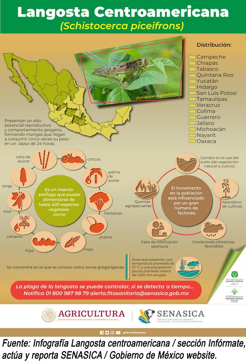 Langosta Centroamericana Senasica Mexico