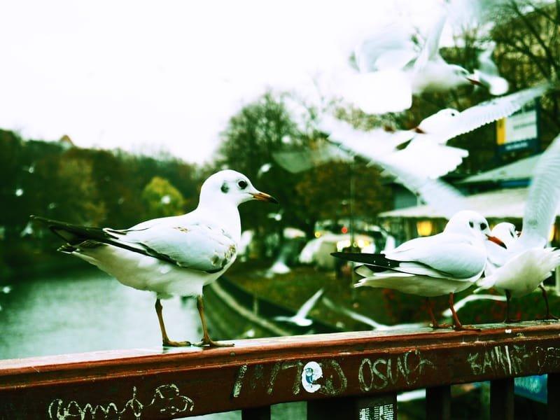 Birds In - Berlin