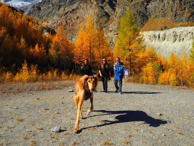 Dog Walk - Saas Fee - Switzerland