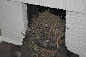 Birds Nest Removal