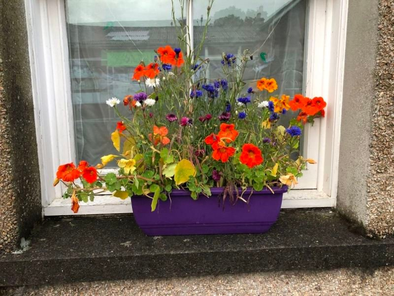 Window box in Orkney