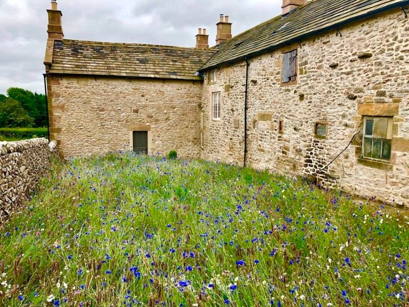 A field of wildflowers in Middleton-by-Youlgrave