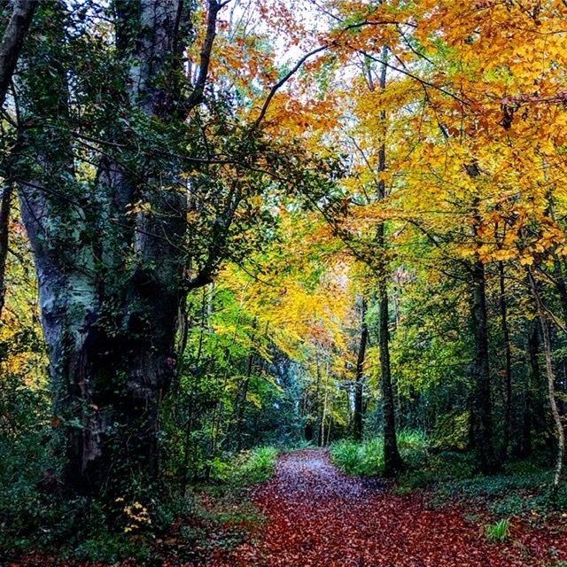 Woodland walk near Florence Court