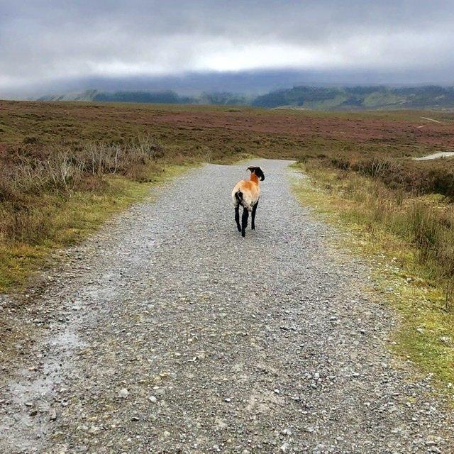 Cuilcagh Boardwalk Trail