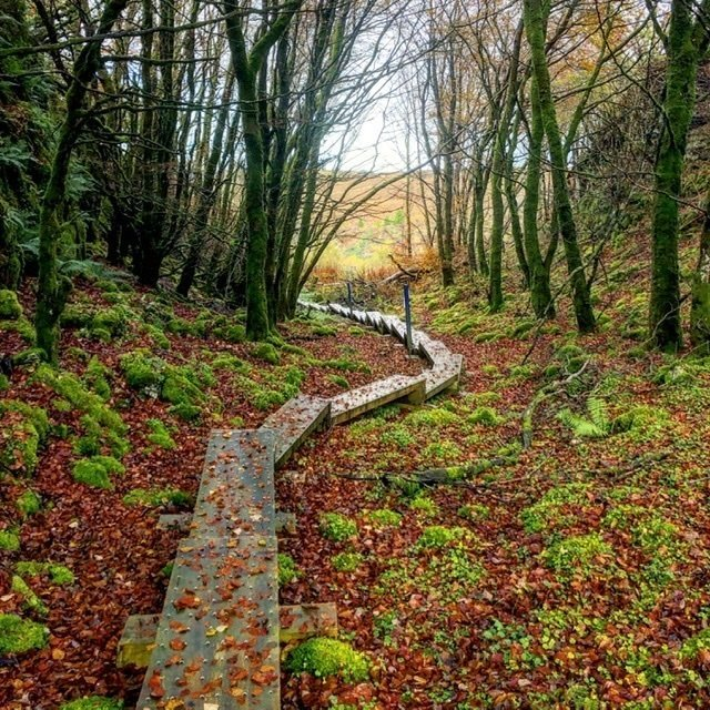 Cavan Burren loop trail