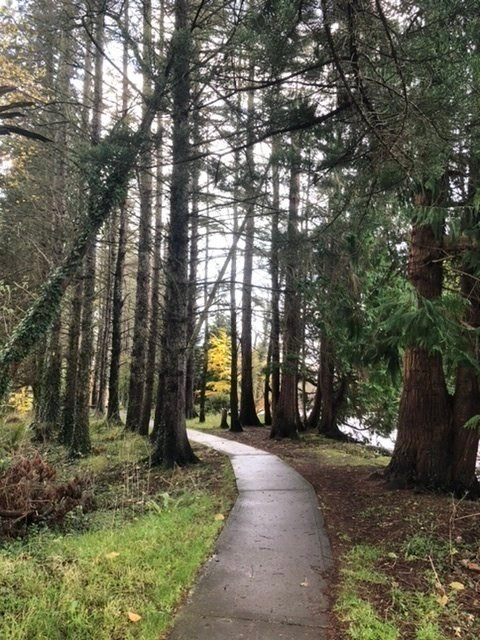 Forest Walk at Lough Gill