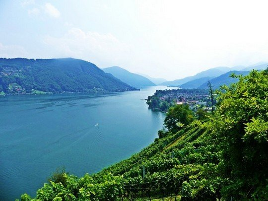 Les vignes du Tessin et le Lac Lugano