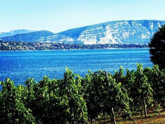 Les vignes genevoises et le Léman