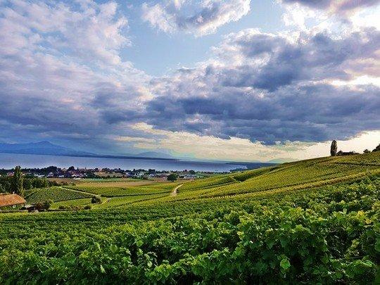 Les vignes du Canton de Vaud