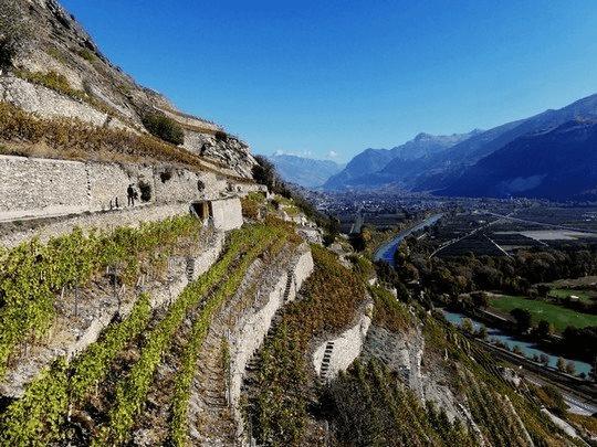 Les vignes surplombant le Rhône (Valais)