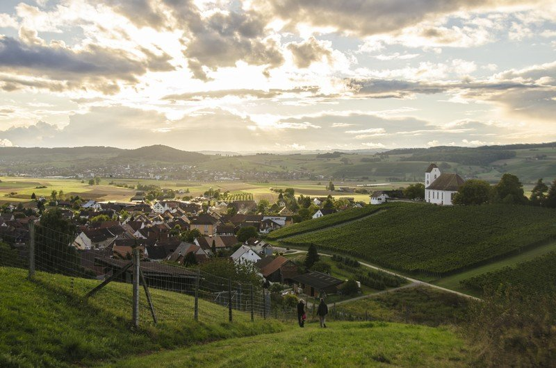 Les vignes de Rötiberg kellerei