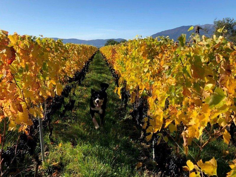 Les vignes du Domaine des Charmes