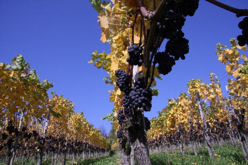 Pinot Noir de Martin Wolfer