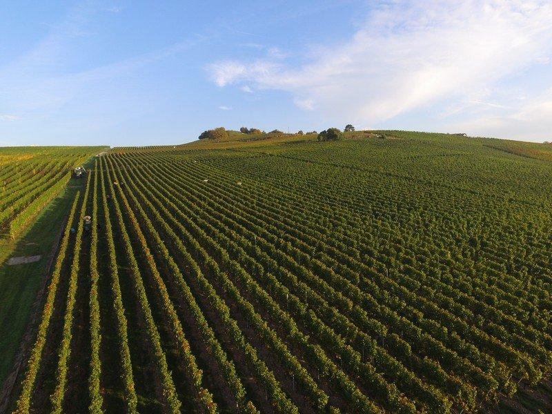 Le Domaine des Curiades à Lully dans le vignoble genevois